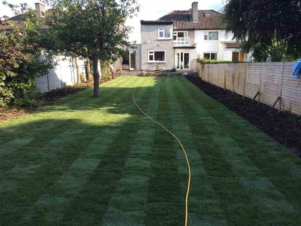 After new lawn in Dublin